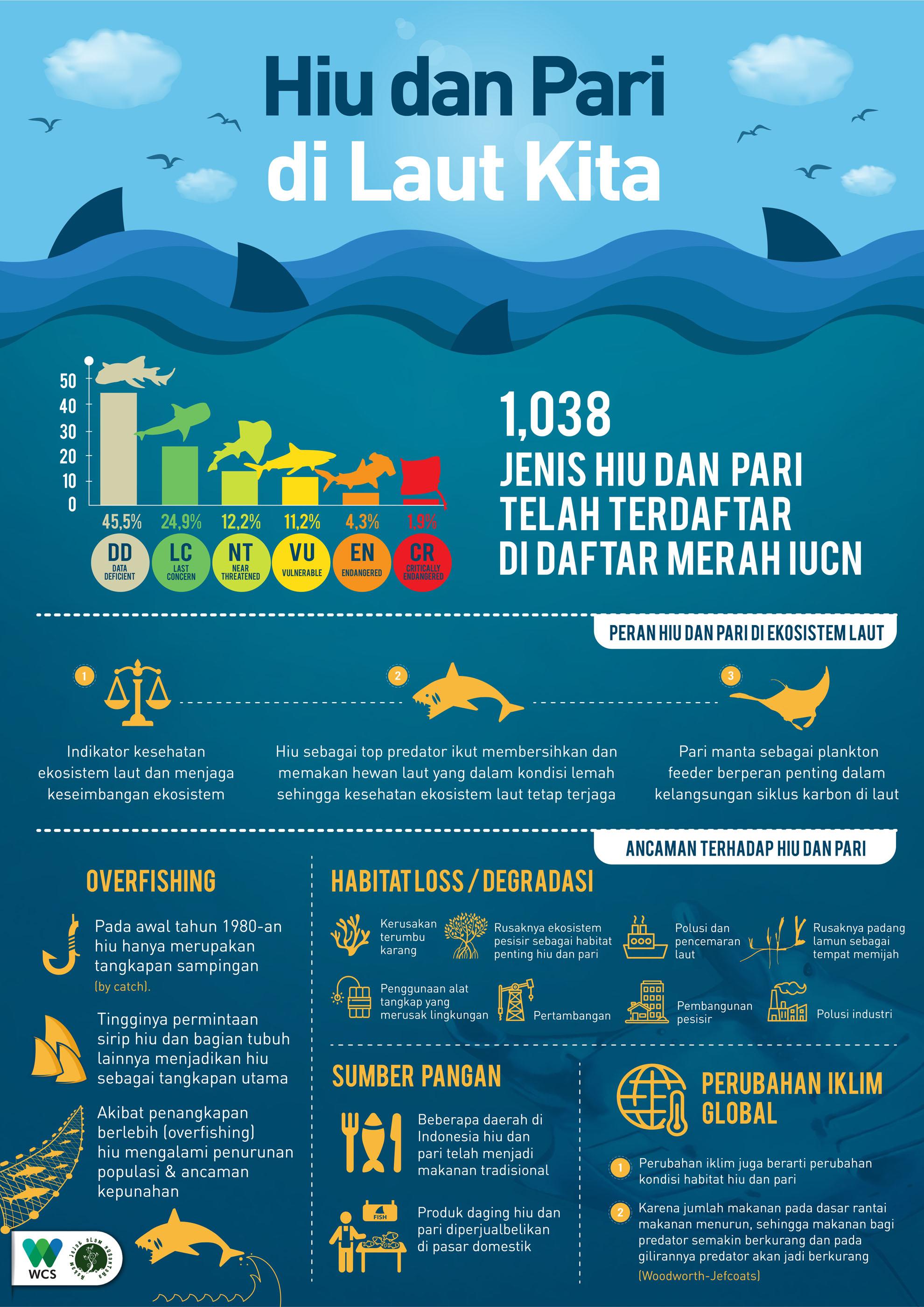 Infografis Hiu dan Pari